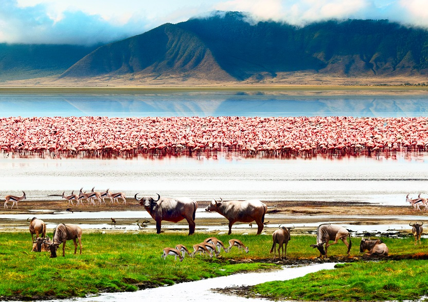 <h3 class='general-font title small white text-uppercase text-center'>Lake Manyara National Park</h3>                              <p class='general-font small white text-justify'>It extends between the lake and the steep western slope of the Rift Valley: it offers the                             opportunity of close encounters with numerous herds of elephants, colonies of baboons, gnu,                             zebras, giraffes, hippos and lions, as well as many varieties of birds, including the elegant                             flamingos.</p>